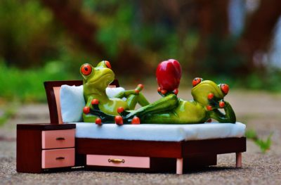 frog-1073356_1920